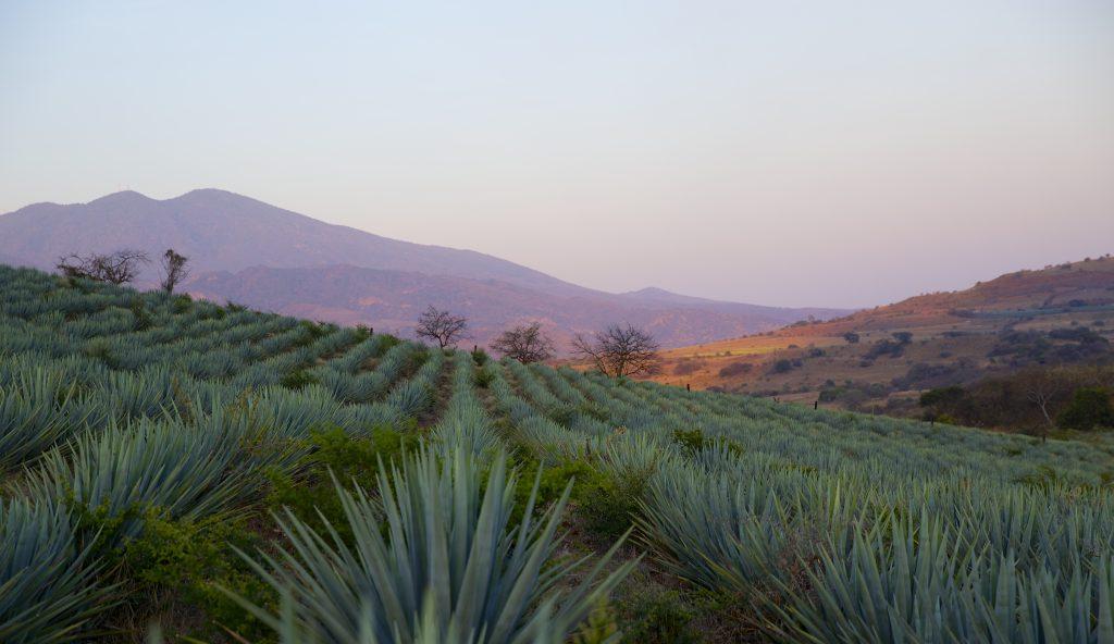 tequila guia de cata fiestas patrias 1