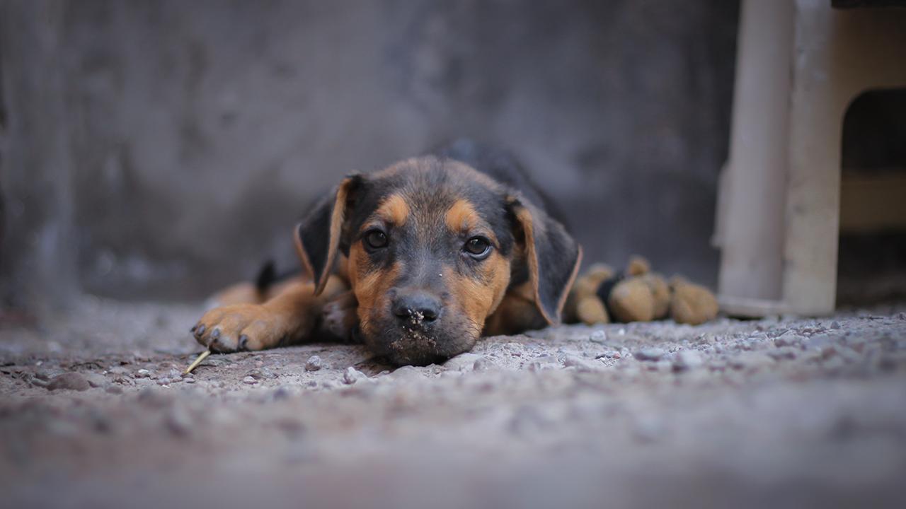 El plan de la semana para los voluntarios que buscan ayudar a mascotas