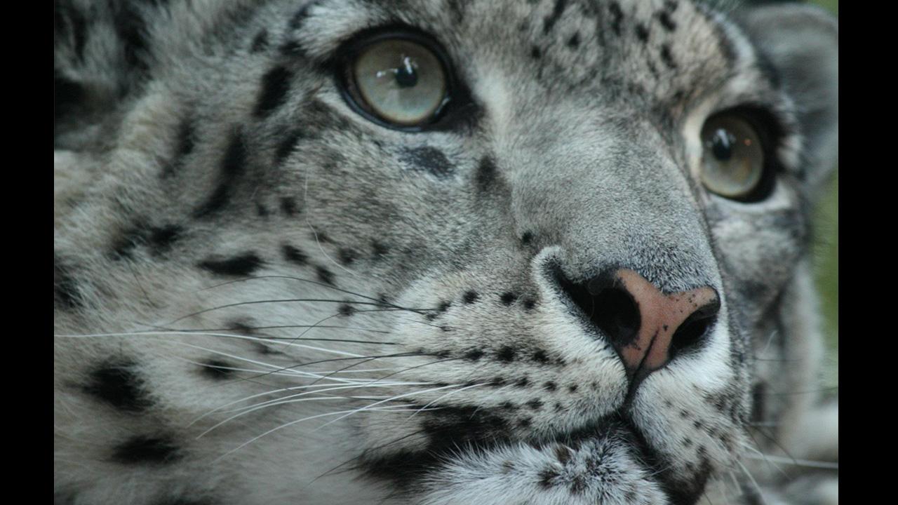 La especie que dejó de estar en peligro de extinción