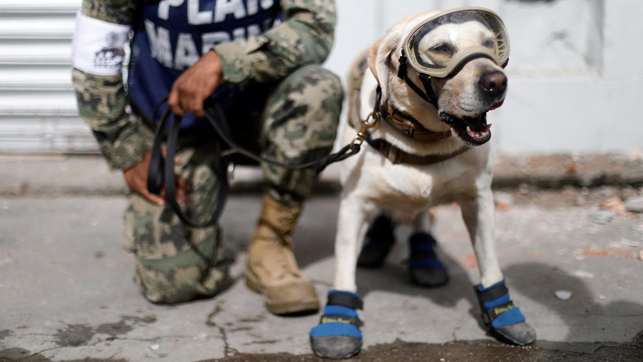 4 patas al rescate de los damnificados por el sismo
