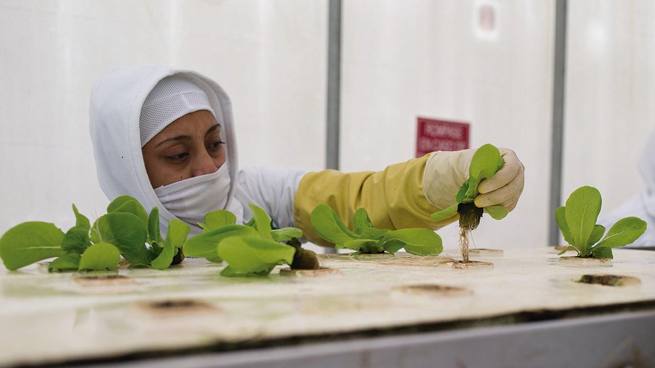 EVA, el futuro de la producción en alimentos