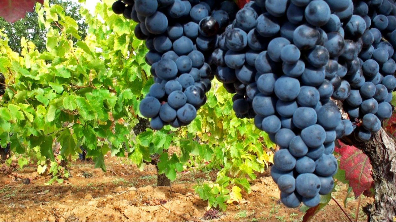 Vino Mariatinto celebra 15 años