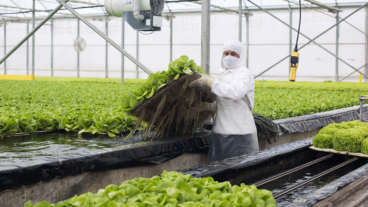 Aranceles son 'perniciosos' para el empleo en México y el mundo: STPS