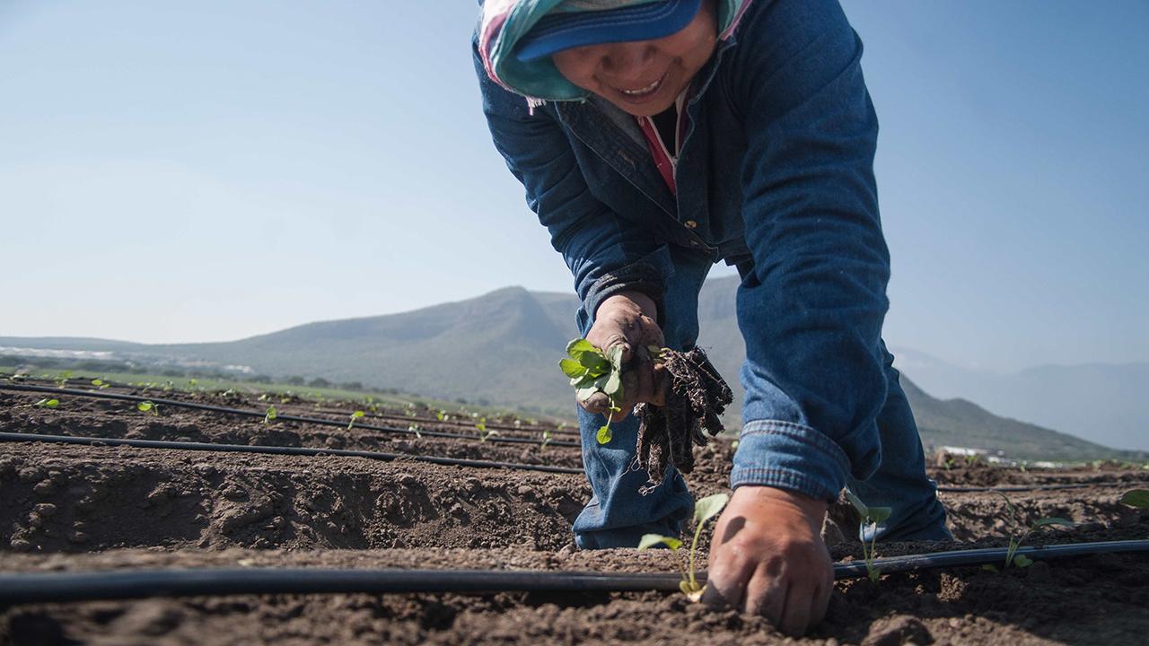 USMCA destraba inversiones en agro por 3,000 mdd en México: CNA