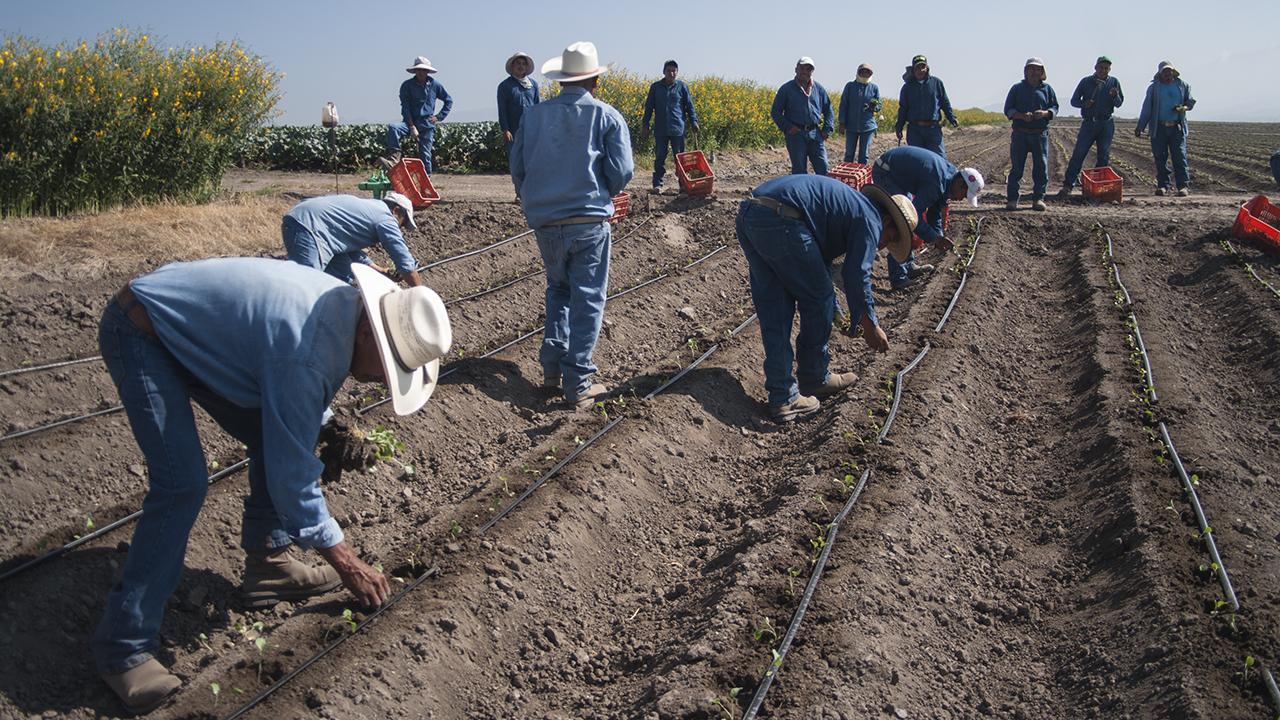 Así es como AMLO planea sacar de la pobreza a 2.6 millones de campesinos