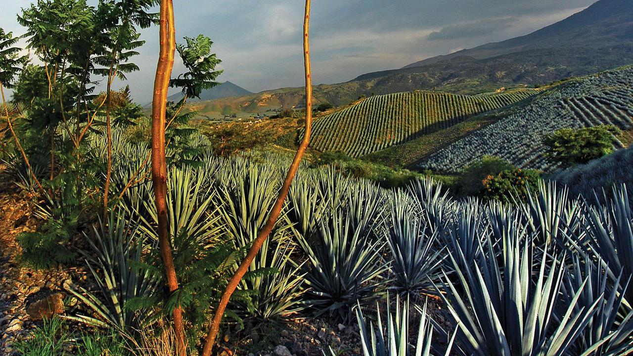 México y la UE actualizan acuerdo para proteger al tequila