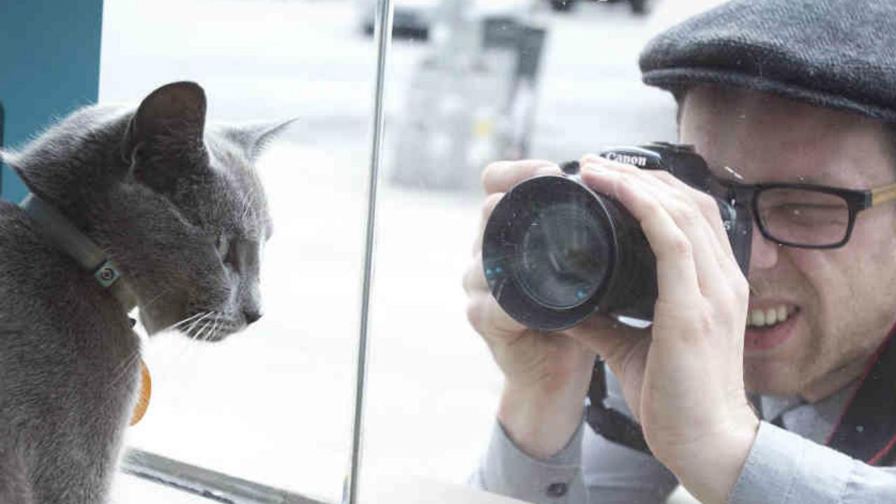 El dilema del gato frente al zorro