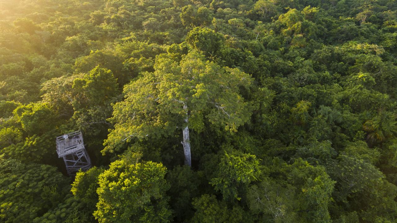 México recibirá financiamiento para proteger sus bosques
