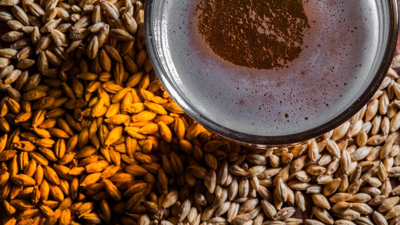 México ya tiene su primera maltería para cerveceros artesanales