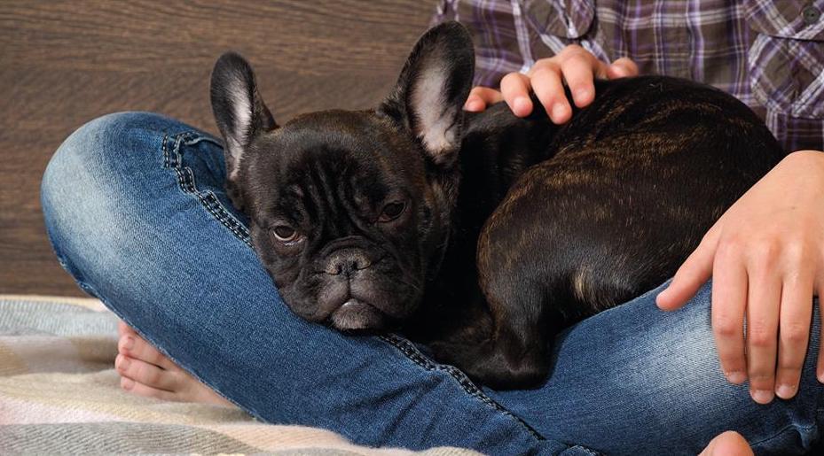 Protege a tu mascota de una enfermedad respiratoria