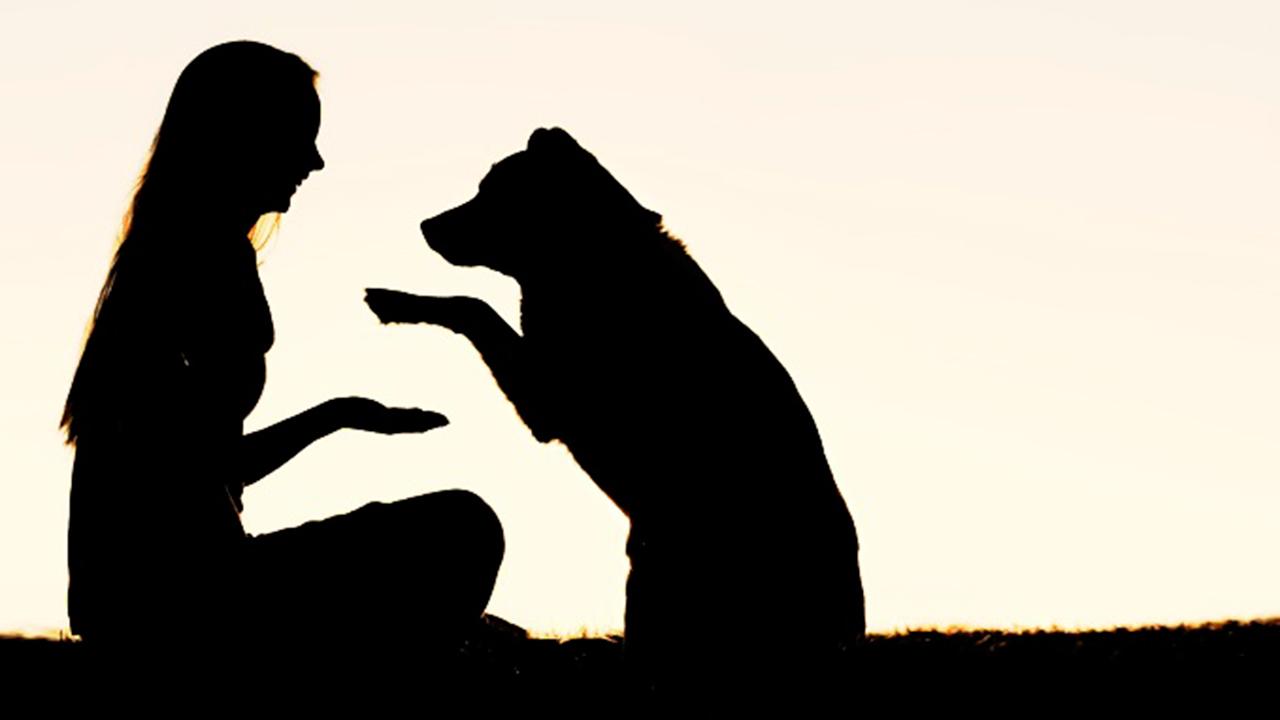 Diputado de Morena propone que las mascotas puedan heredar bienes