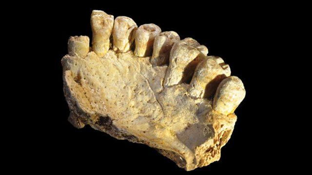 mandibula-homo sapiens
