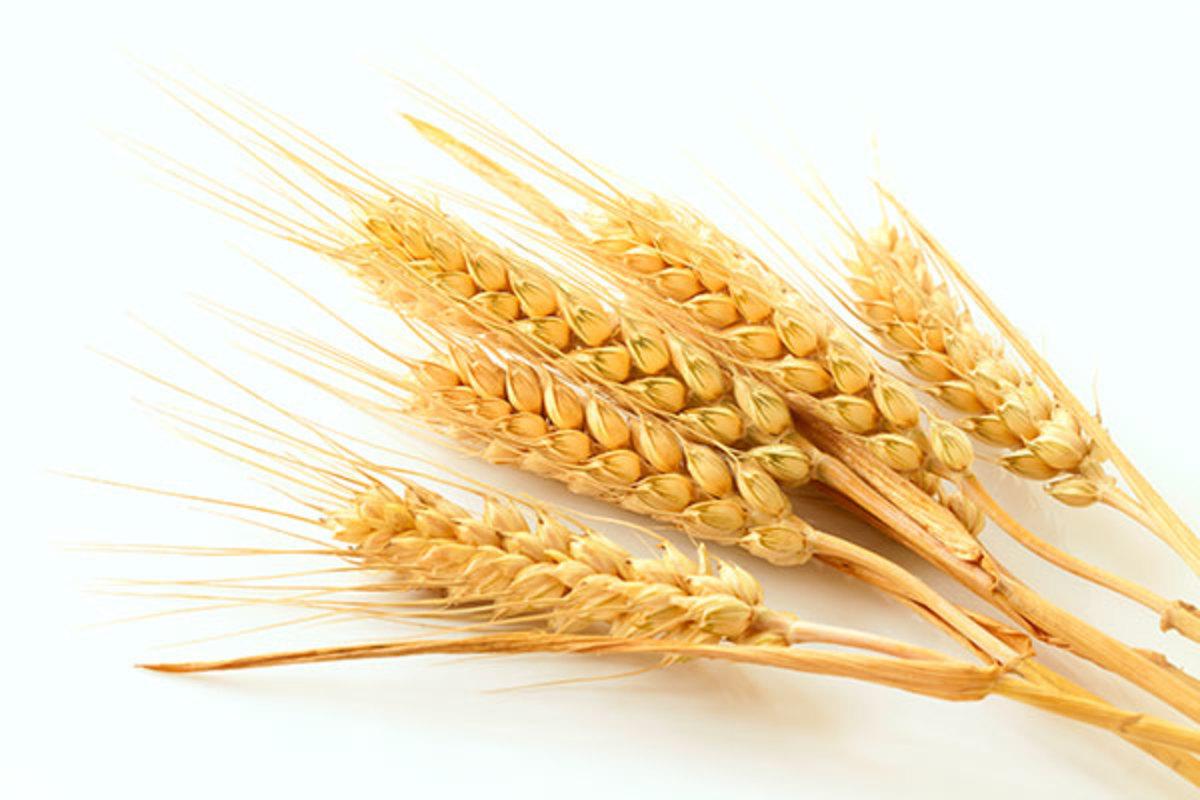 gluten, celiaquía, trigo, granos, cereales