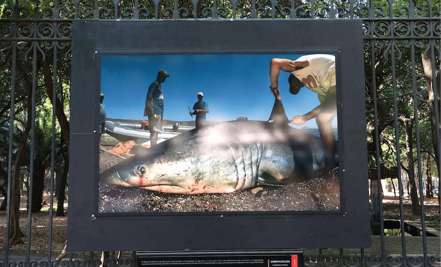National Geographic, Conabio, Nuestras batallas contra la extinción