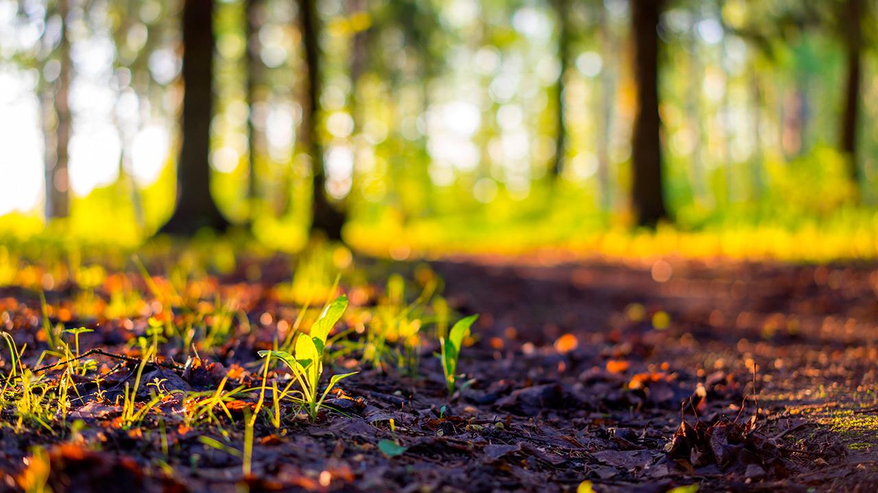 IMCC encabeza compromiso con el desarrollo sustentable