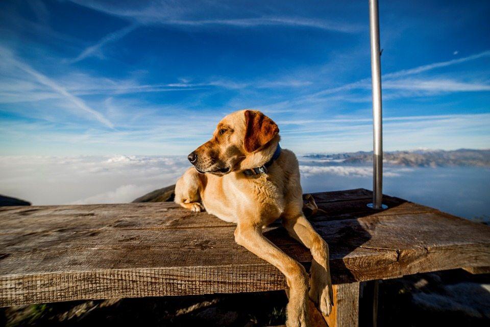 Semana Santa, Adoptare, mascotas, viaje