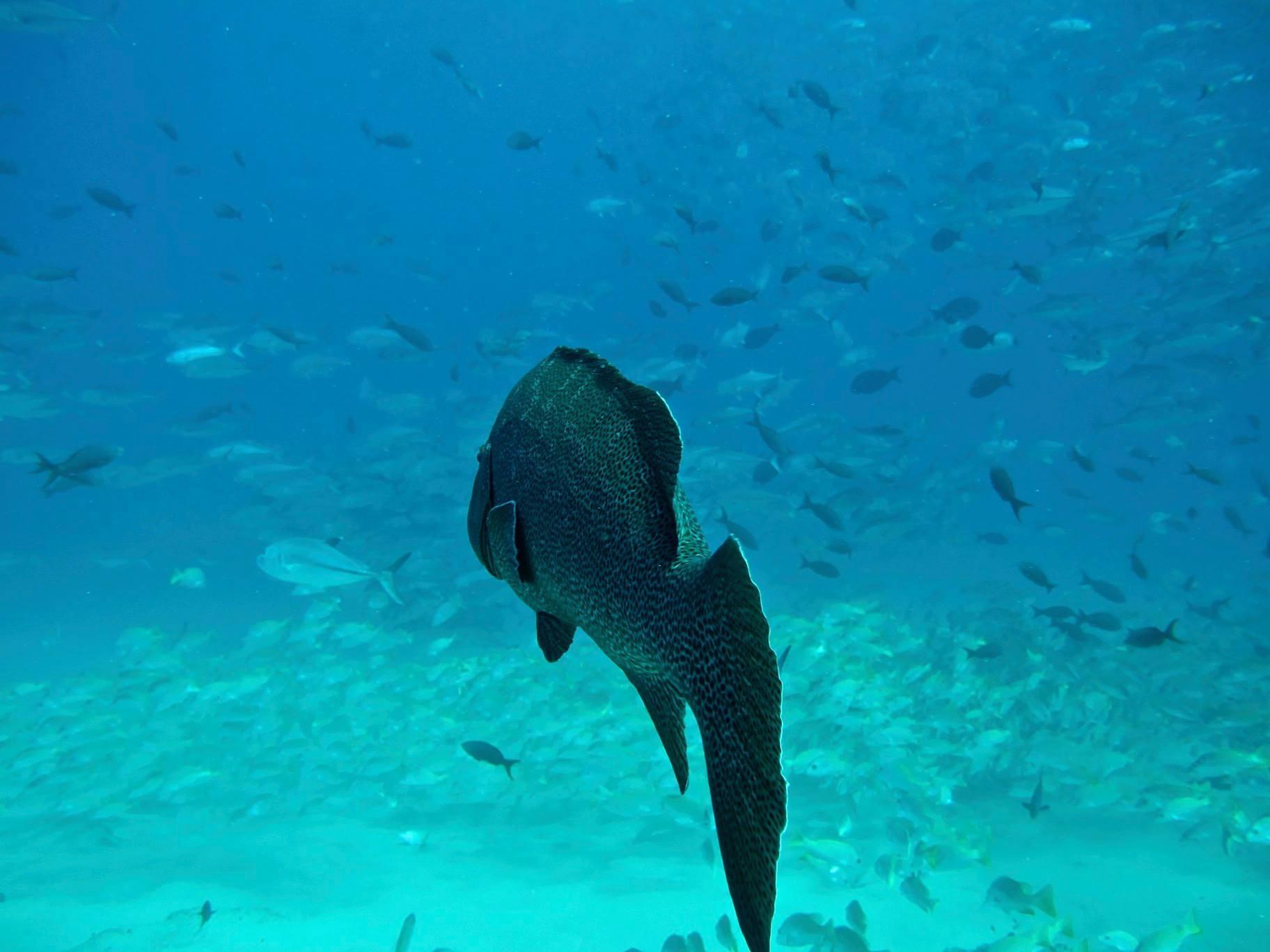 Canadá busca prohibir plásticos desechables para proteger los océanos