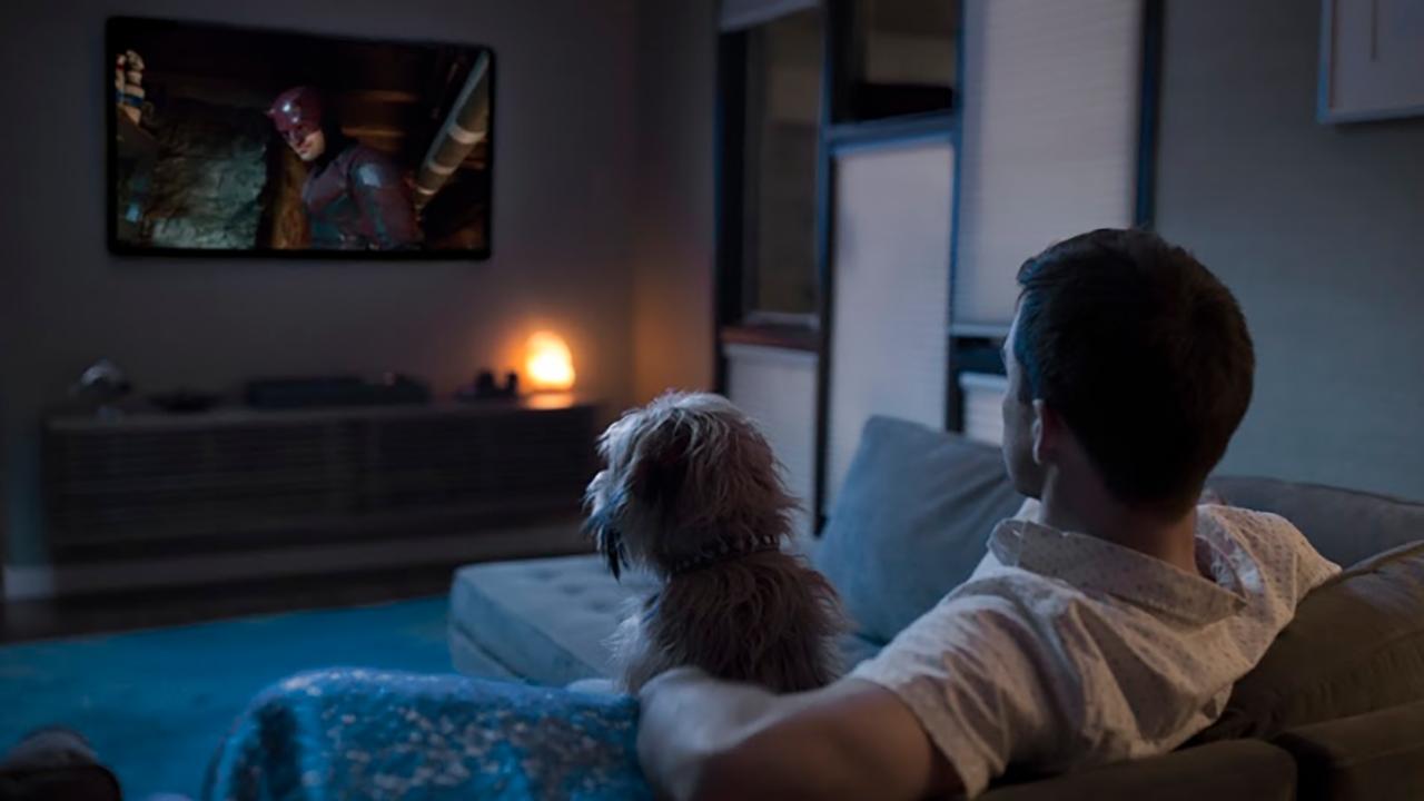 Tu mascota es el mejor compañero para ver series en Netflix