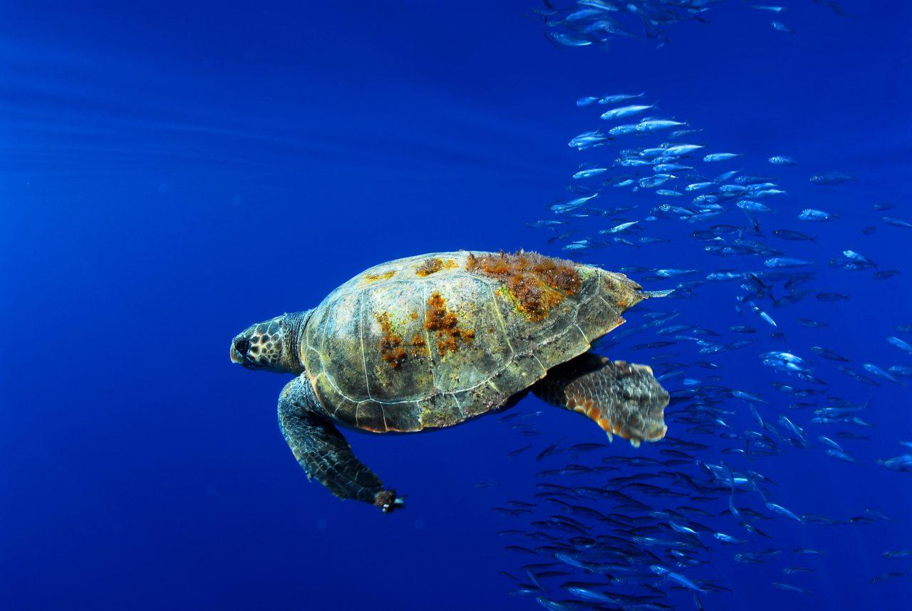 El mar Mediterraneo es el más contaminado con plástico del mundo