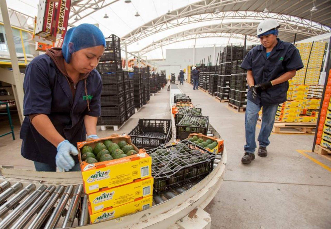 Kilo de aguacate alcanza los 70 pesos en Tijuana