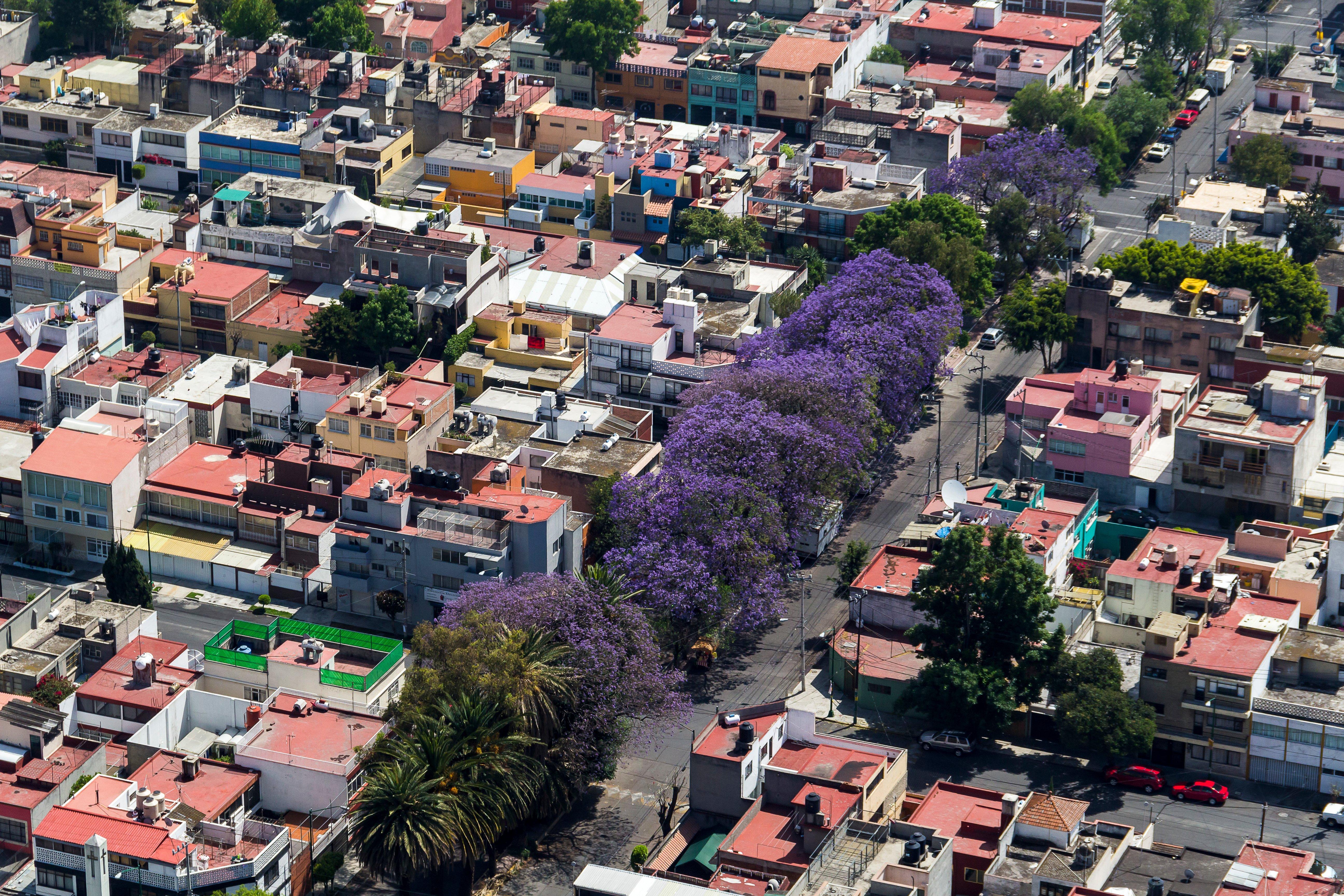 Jacarandas Ciudad de México TripAdvisor