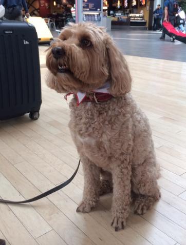 Vancouver, YVR, Embajadores Caninos