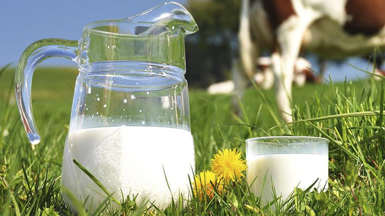 Grupo Lácteo del Caribe invierte 30 mdd en nueva planta en República Dominicana
