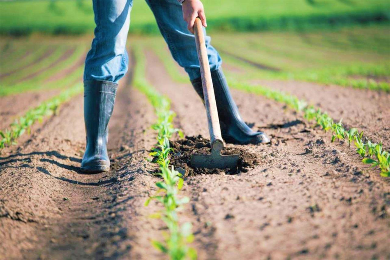 Así es cómo Aires de Campo empodera a pequeños agricultores