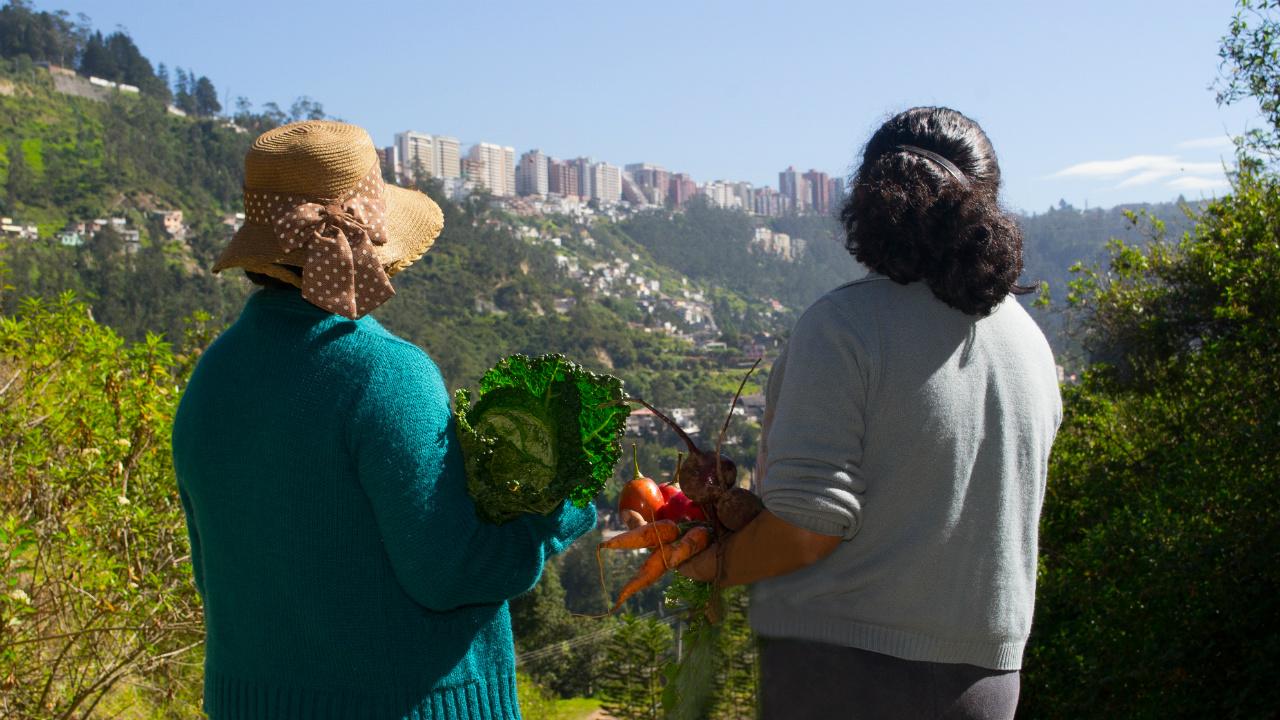 Agricultura Urbana: un motor de la resiliencia