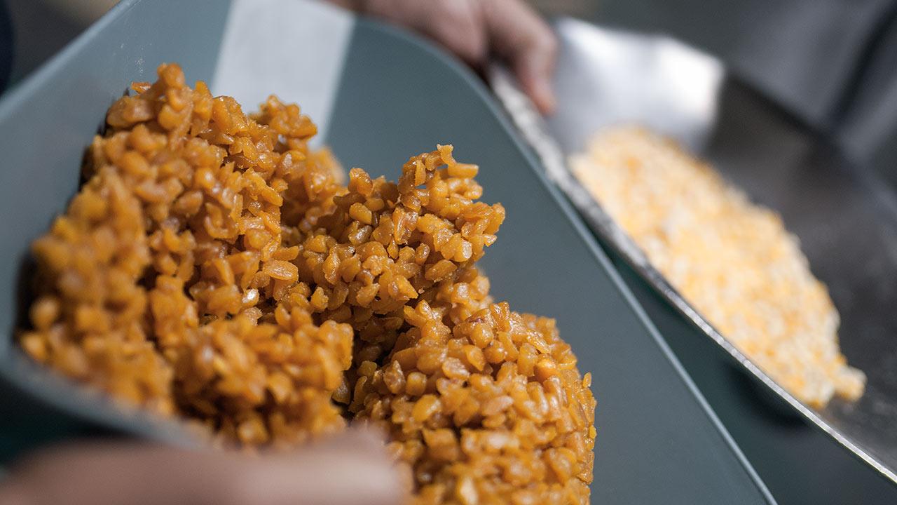 Después de ser quebrado a la mitad, los granos de maíz amarillo se cuece hasta quedar blando. Foto: Angélica Escobar/Forbes México.