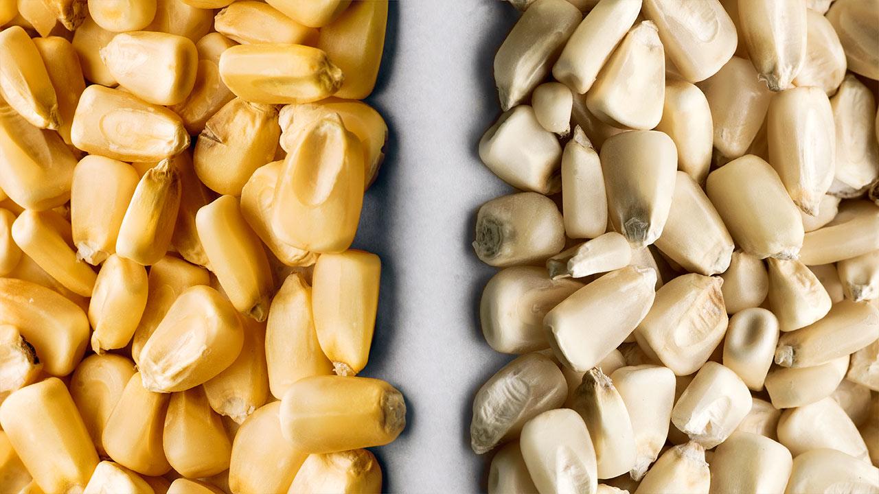 Plan de Kellogg's: producir en México maíz amarillo
