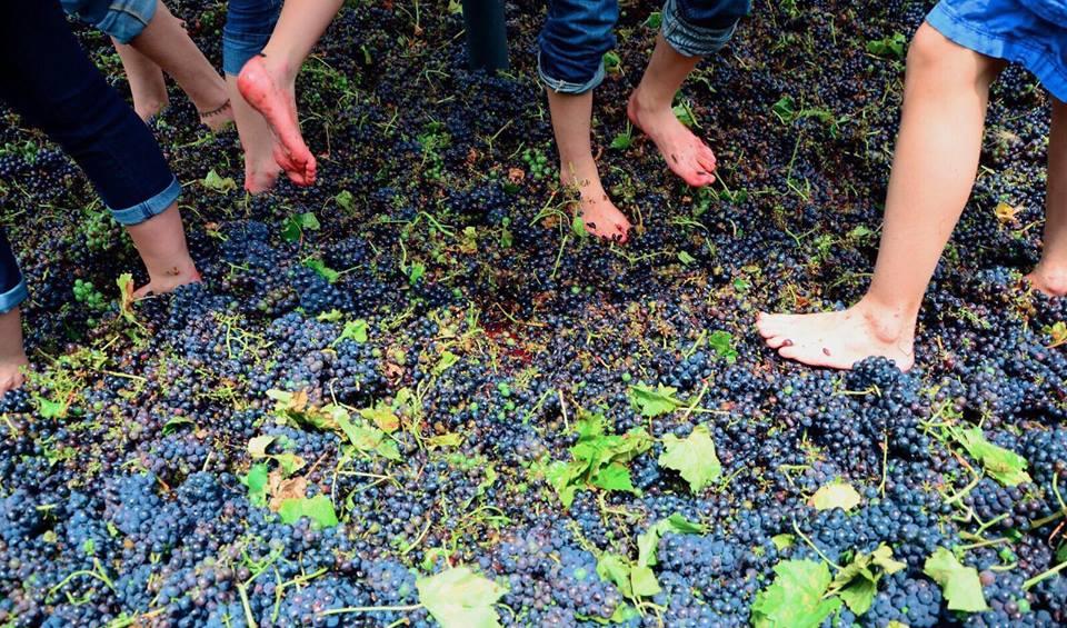 ¿Amante del vino? Estas son las mejores fiestas de la vendimia en México