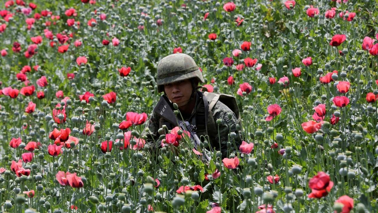 Despenalización de drogas suma respaldo mientras EU lidia con 'epidemia'