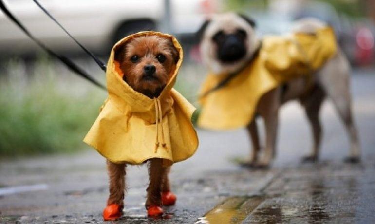 Aprende a cuidar a tu mascota en época de lluvias
