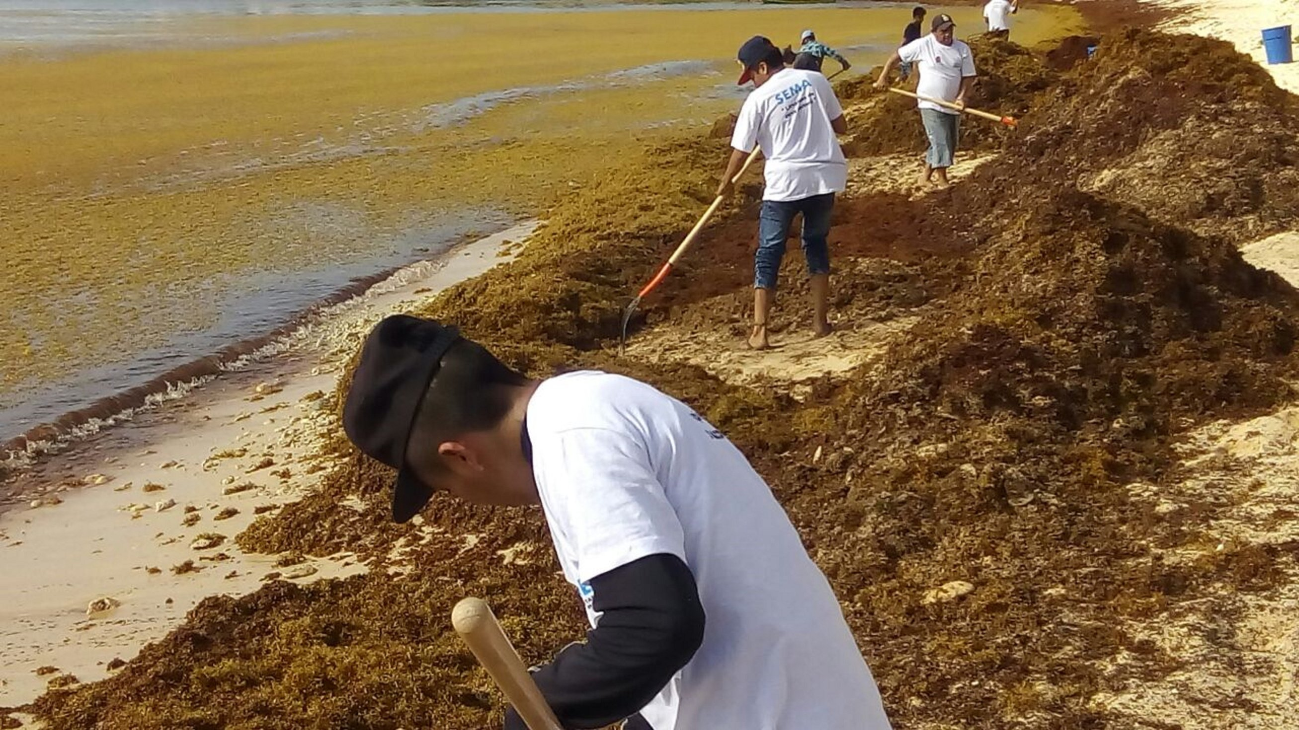 Sargazo invade también playas de Oaxaca; urgen apoyo al gobierno federal