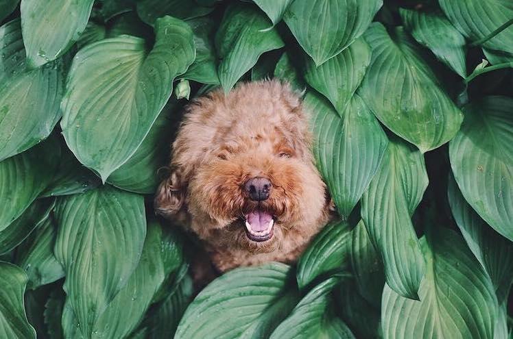 Consejos para convertir a tu mascota en estrella de Instagram