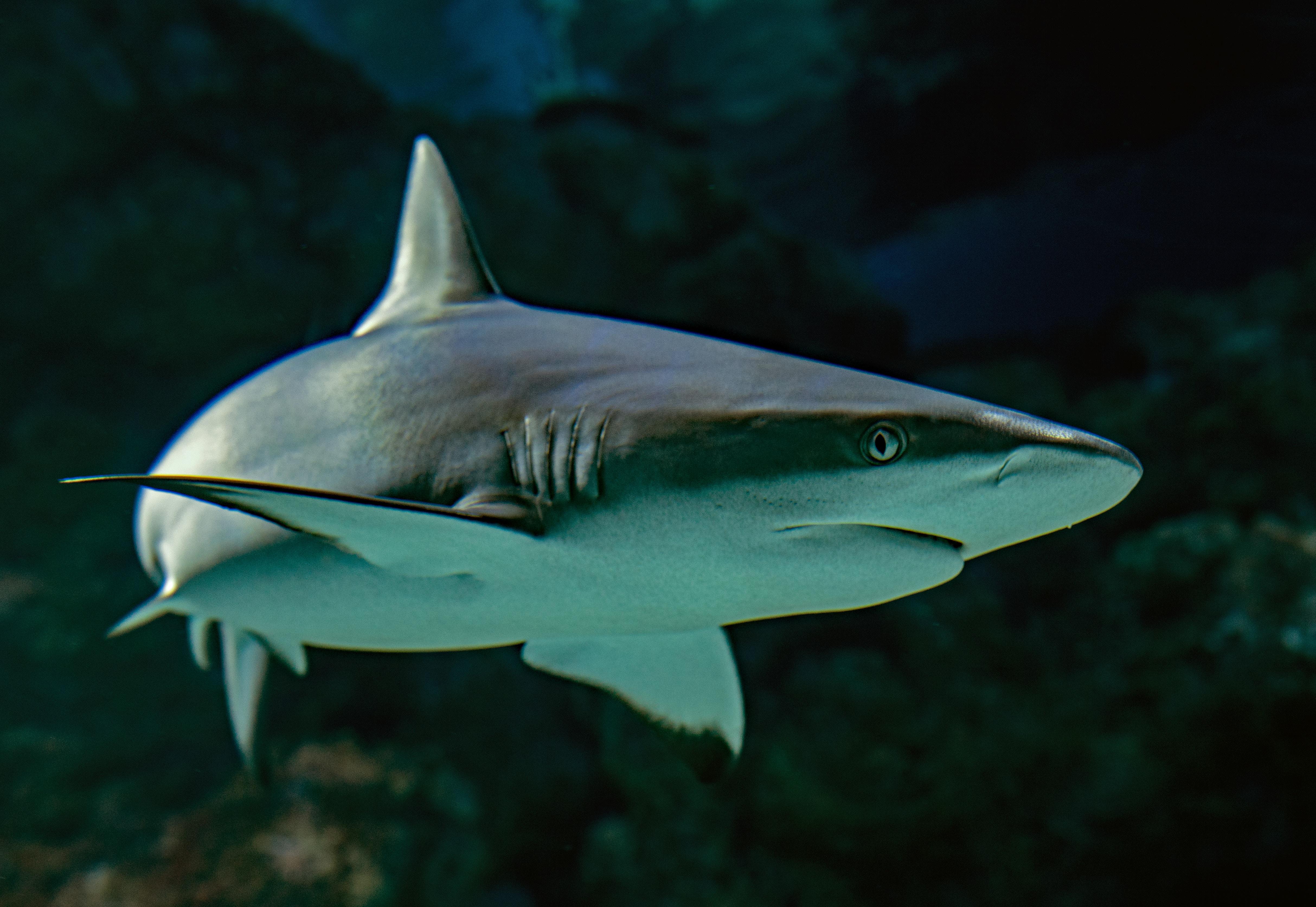 Análisis | El acuerdo EU-México dice no a China y a las aletas de tiburón