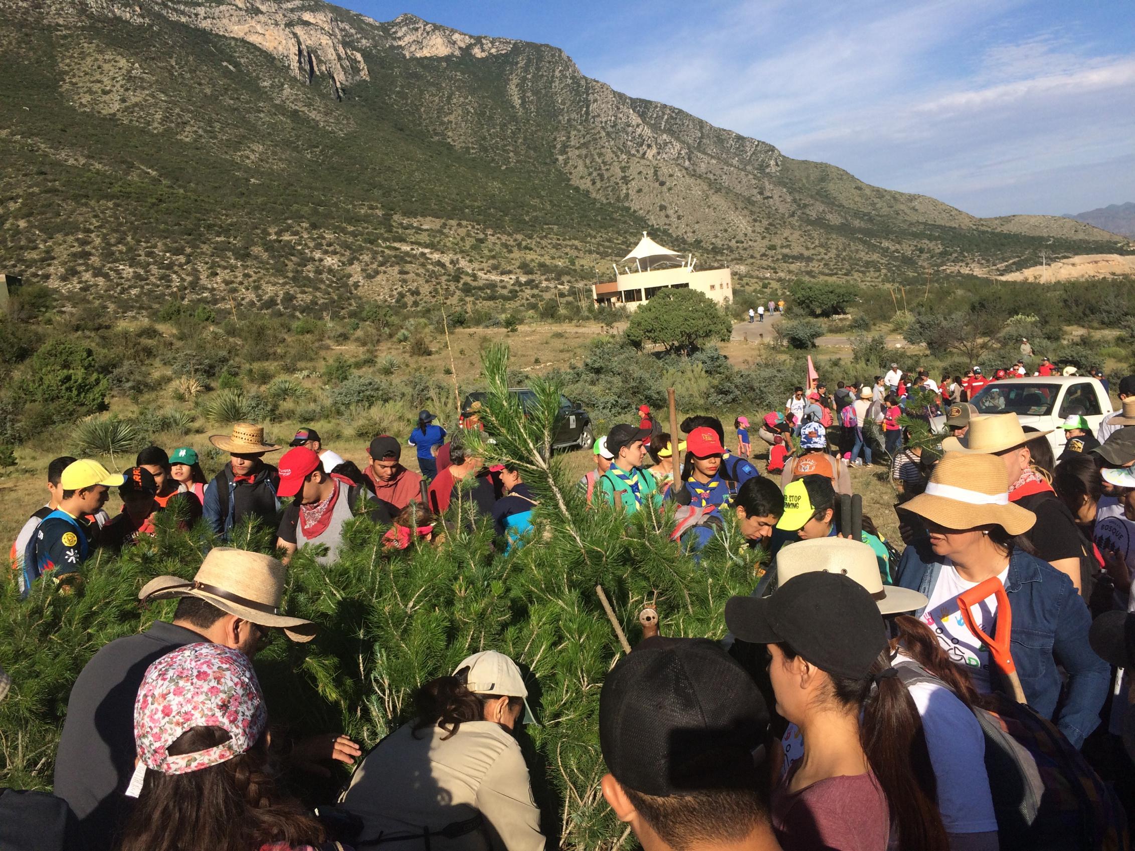 México y el preocupante retroceso del bosque