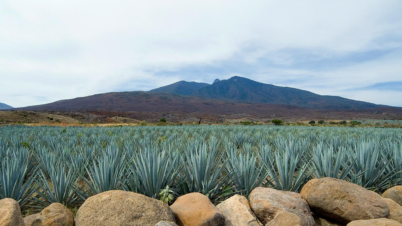 El tequila ya es pieza clave del desarrollo económico de México