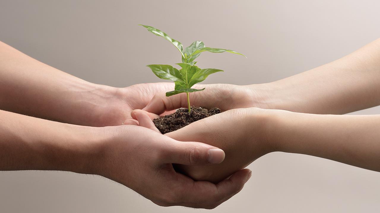 El valor económico de la IMCC está centrado en un futuro sustentable