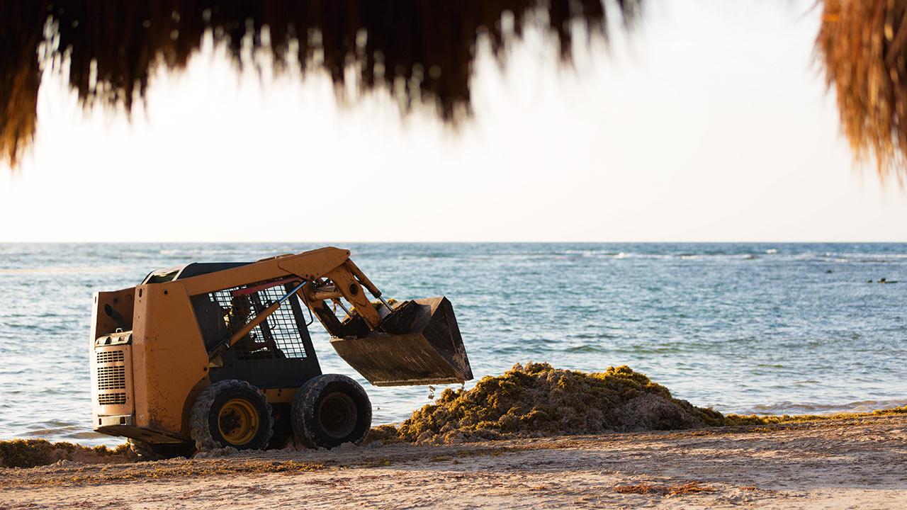 El incómodo visitante que invadió las playas de Quintana Roo