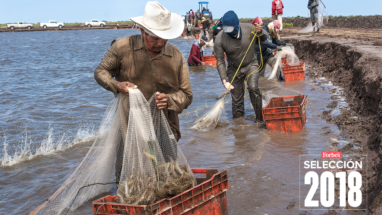 Selección 2018 | Así es como México siembra y cosecha camarones en Sinaloa