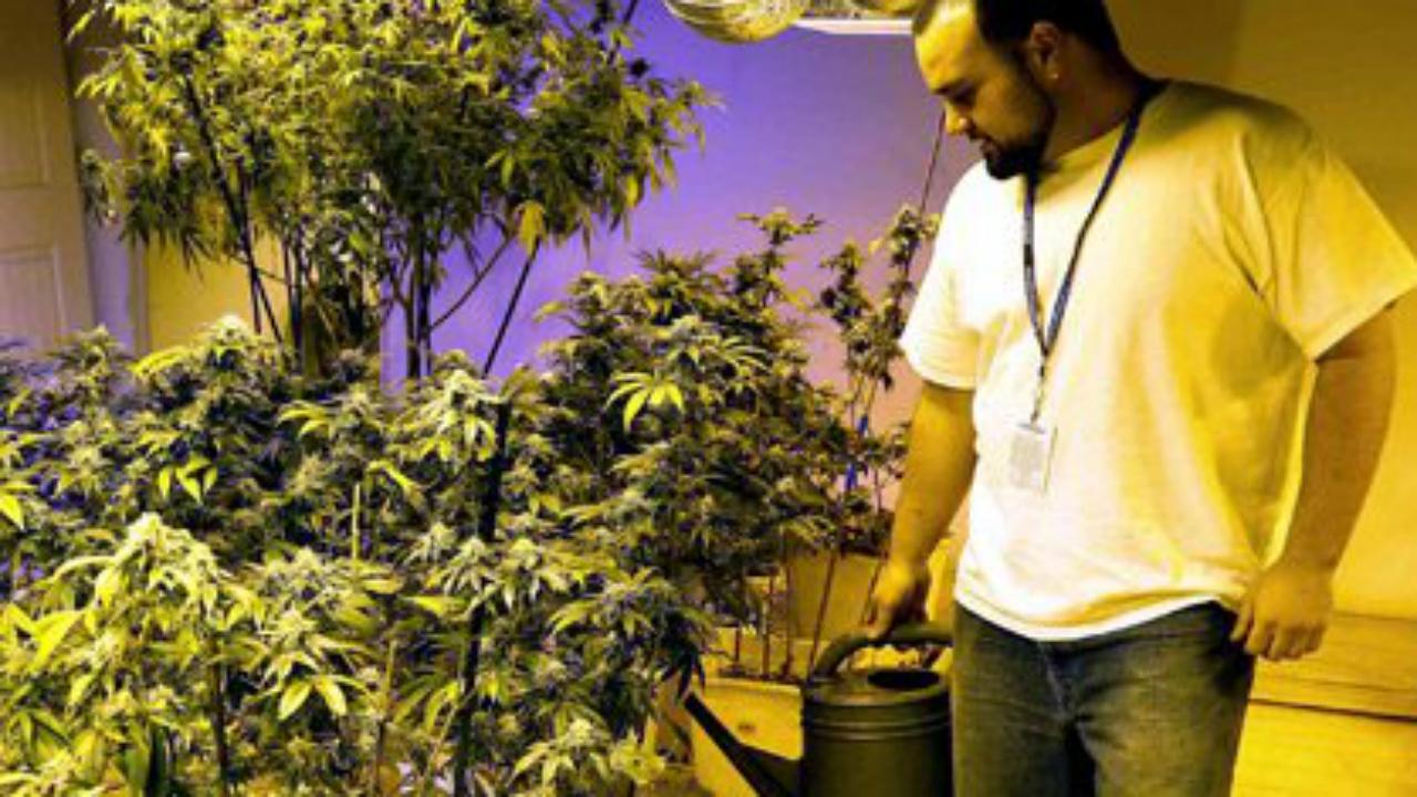 Estableciendo la industria de la cannabis en EU
