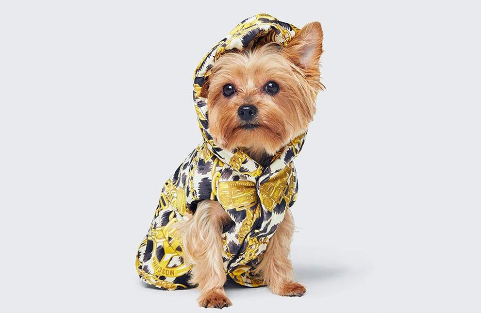 Moschino y H&M lanzarán colección de moda para tu mascota