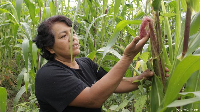 Los indígenas que luchan contra la construcción de un gasoducto en el sur de México