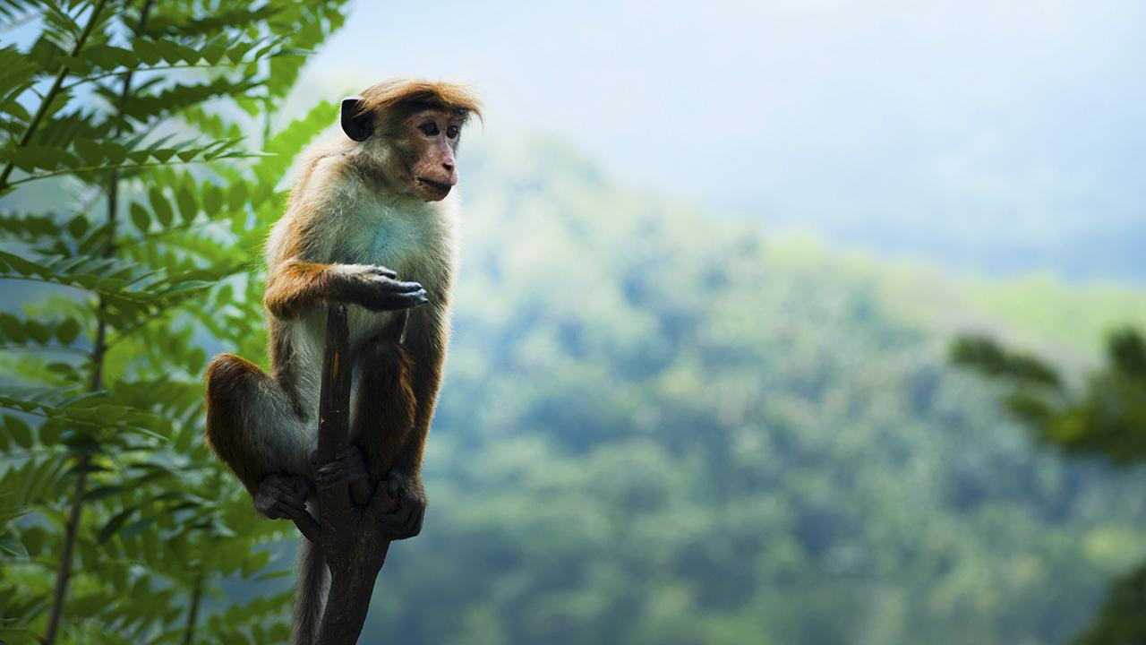 México, tercer país con mayor número de mamíferos en riesgo de extinción