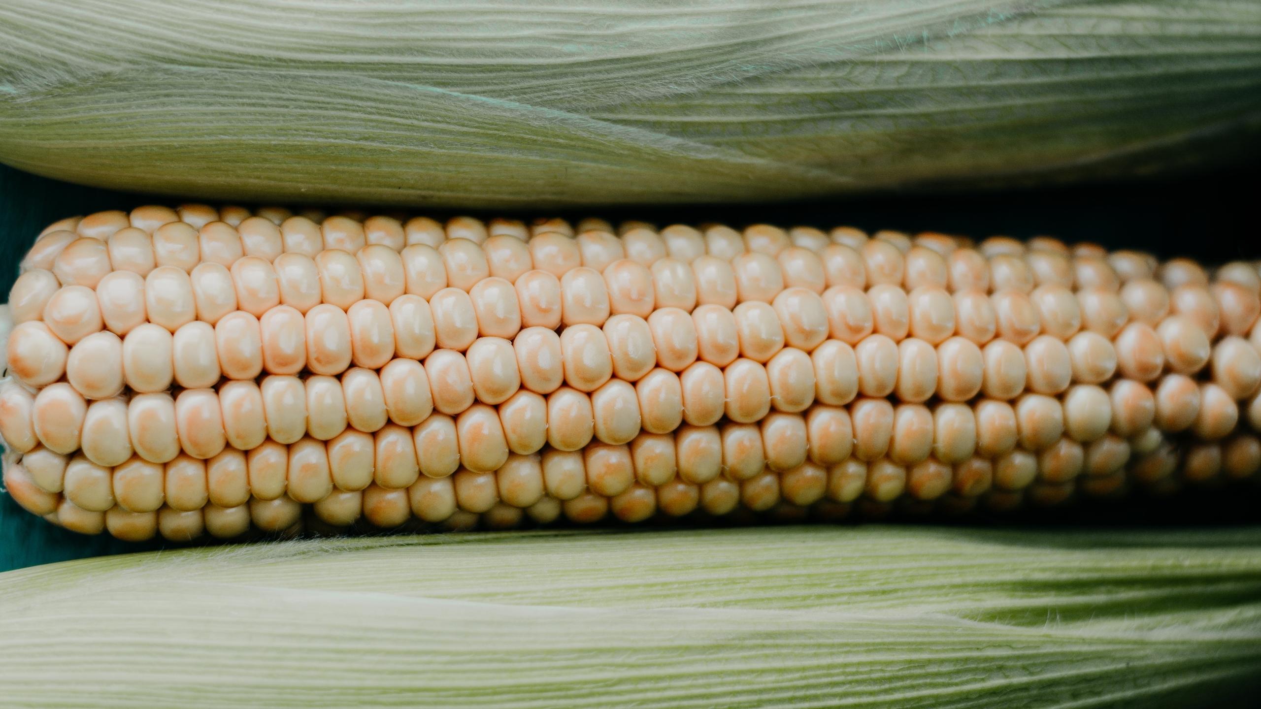 Análisis de harina de Maseca halla maíz transgénico y el herbicida glifosato