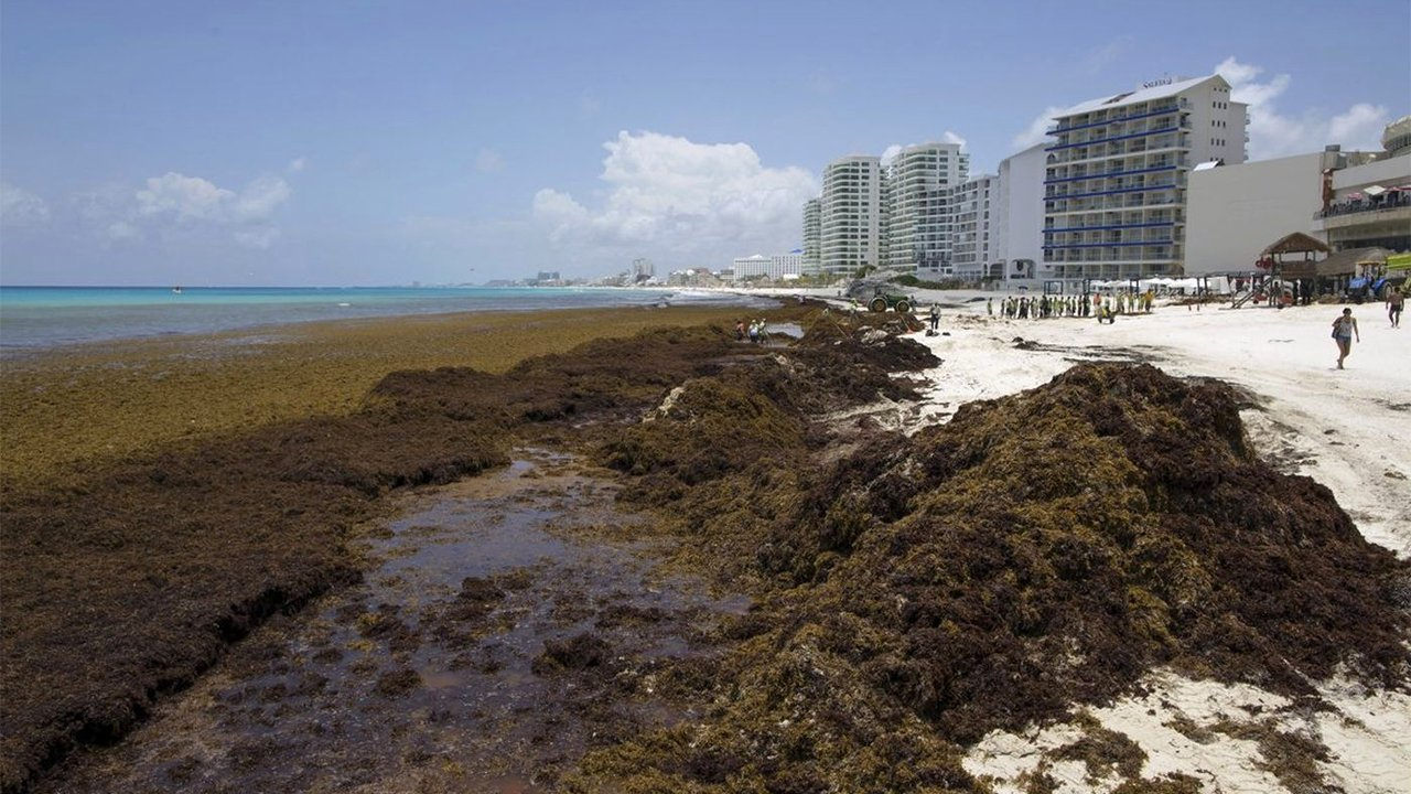 El sargazo que inunda las playas podría volverse 'oro rojo' para el país