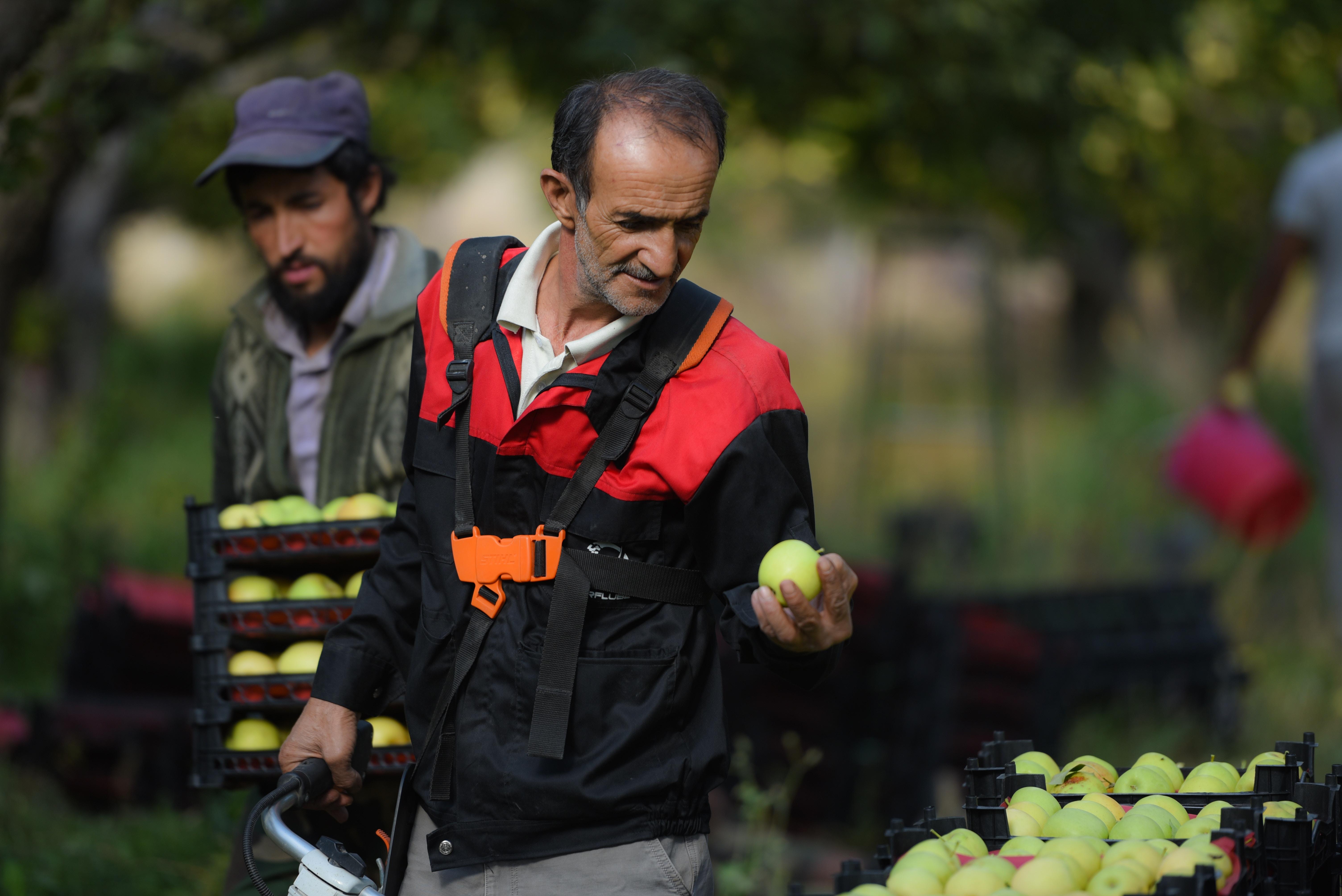 Agricultores ecológicos busan proteger el patrimonio alimentario de Italia