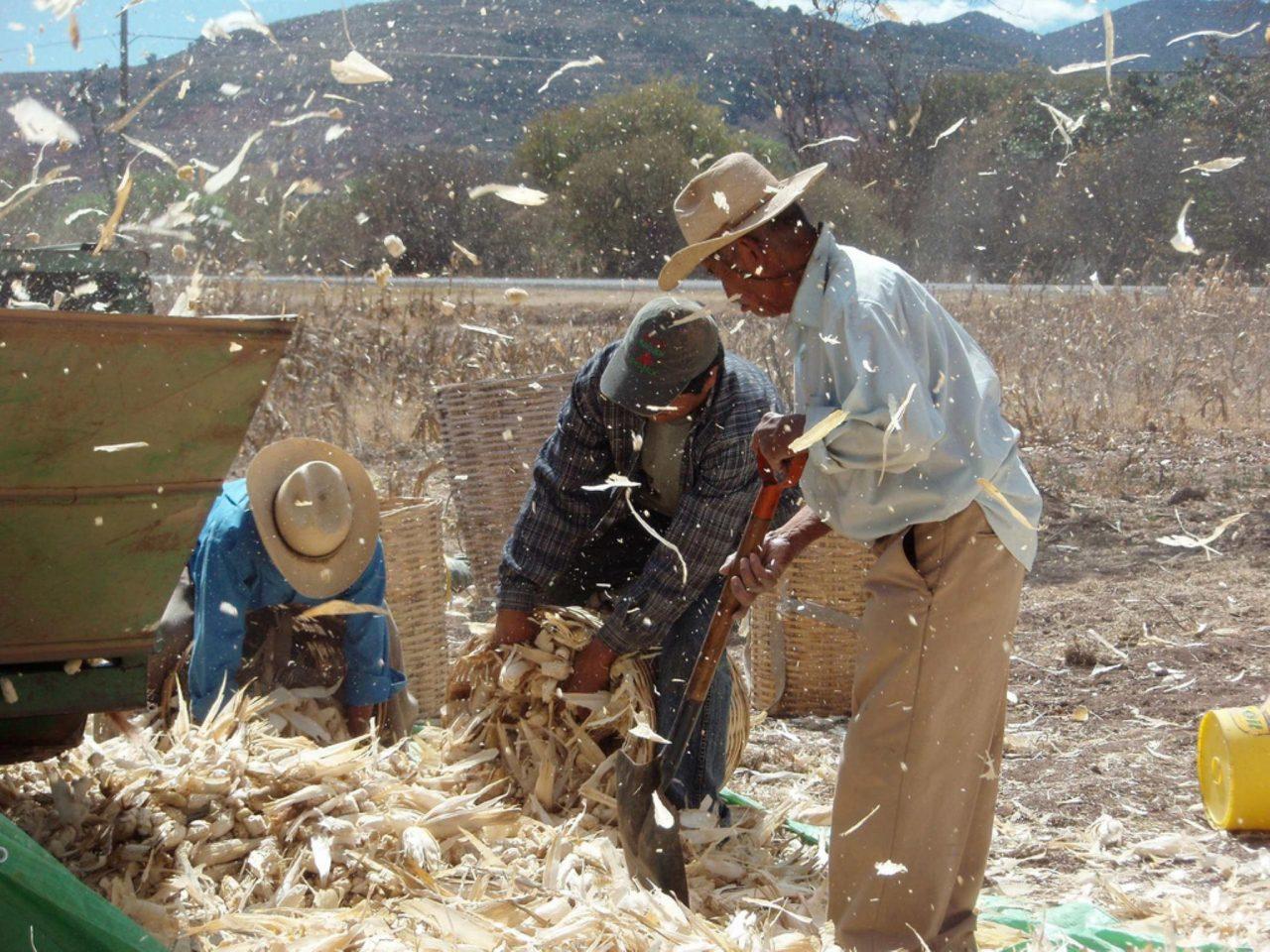 Actividad económica de México retrocede 0.3% por sector agrícola
